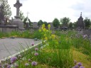 Ronse begraafplaats