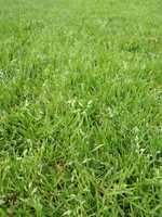 groenzone-gazon