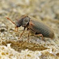 Houtworm 2