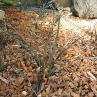 Bij aanplant van bomen en struiken